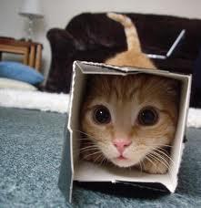 tinybox
